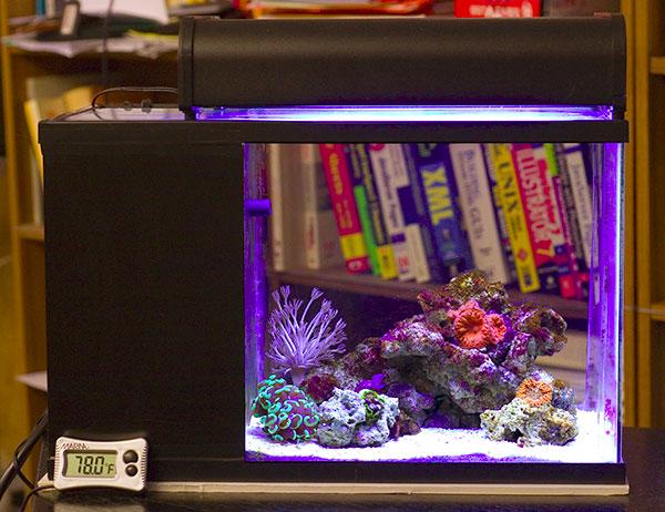 6 6 Gallon Bookshelf Tank. My coral island in the tank