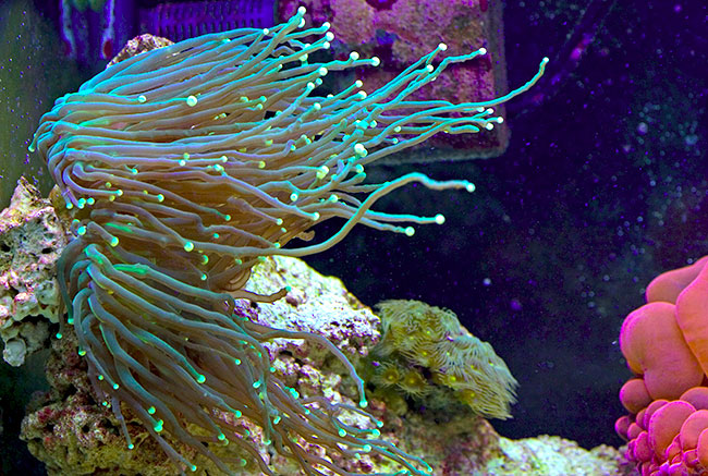 My 20g mainly elegance coral other lps members for Aquarium elegance