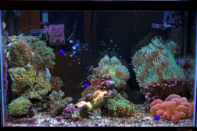 My 20g mainly elegance coral other lps page 2 for Aquarium elegance