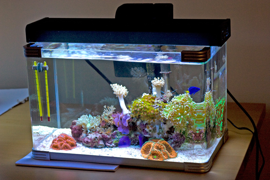 Anyone with a 5 5 5 gallon nano show them here reef for 5 gallon fish tank dimensions