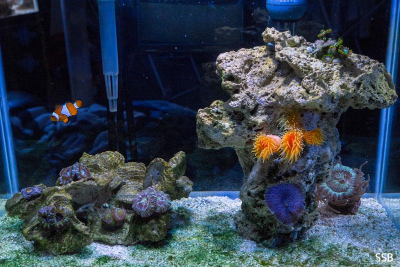 Rimless Pico Reef Tank