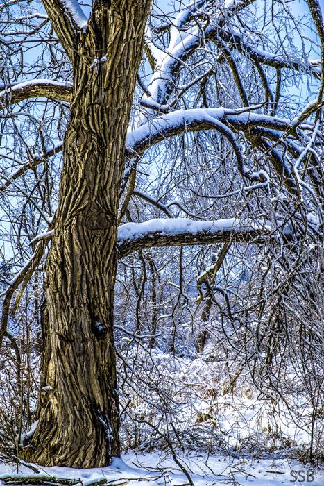 http://www.tulwar.com/imagehost/winter_201312_2.jpg